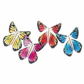 Magic Butterfly - Rainbow