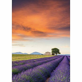 Field of Lavender Provence (Schmidt 500pc)
